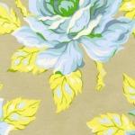 Hello Roses –Dove