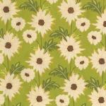 Daisy Path –Celery