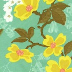 Dogwood Bloom –Sunglow